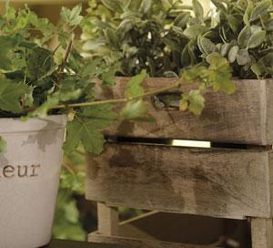 La caisse en bois de manguier – Jardin d'Ulysse